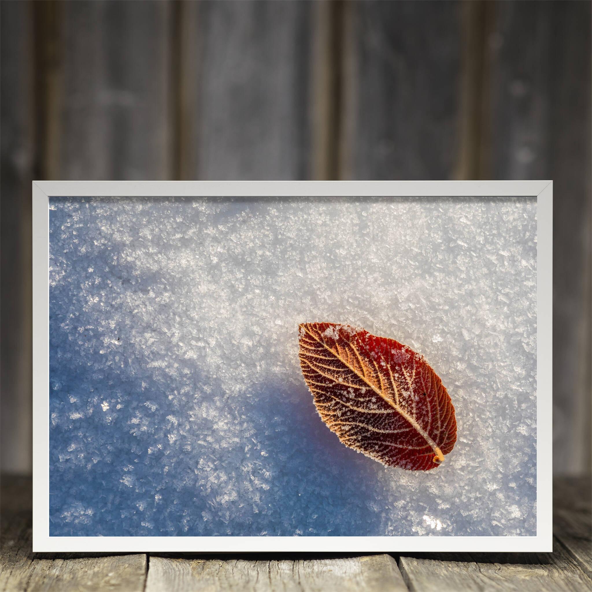 Blatt im Schnee Rahmen 'Riga' A3 ohne Passepartout