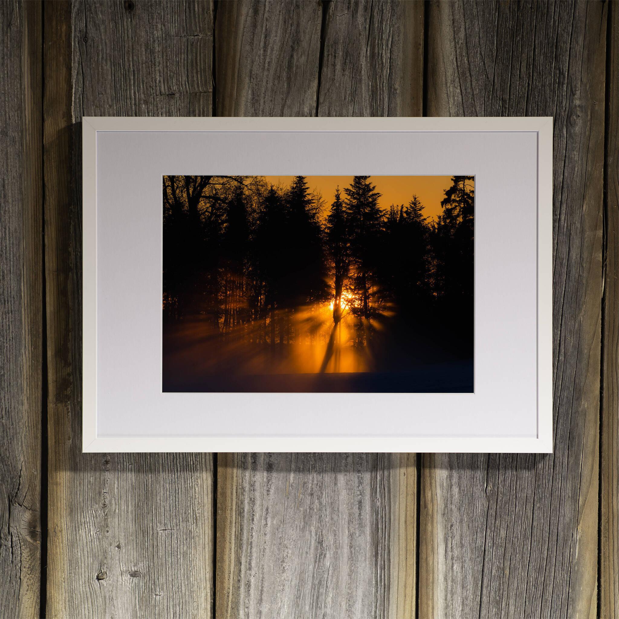 Sonnenuntergang hinter dem Wald Rahmen 'Riga' A3 mit Passepartout