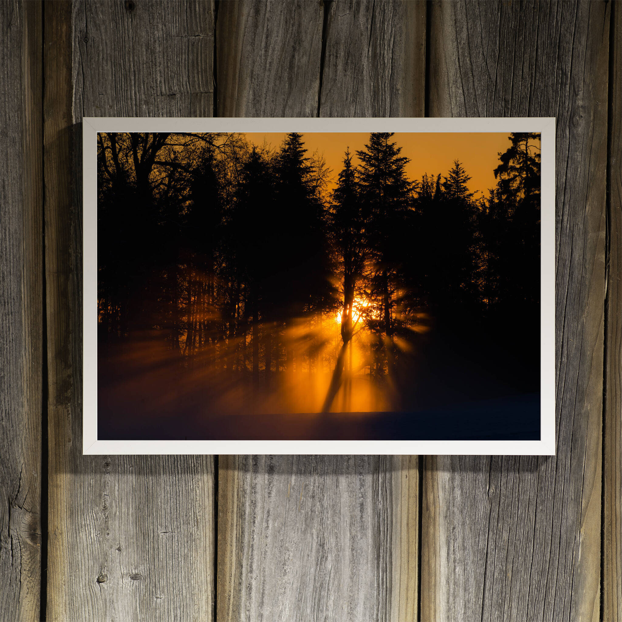 Sonnenuntergang hinter dem Wald Rahmen 'Riga' A3 ohne Passepartout